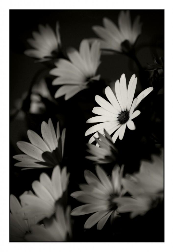 Solitario come un fiore Simone Civita