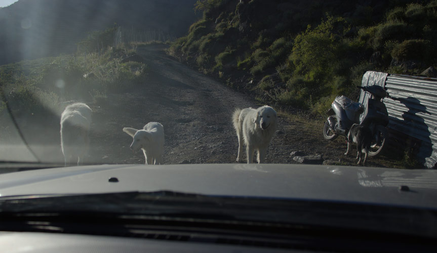 Cani monte Aiona