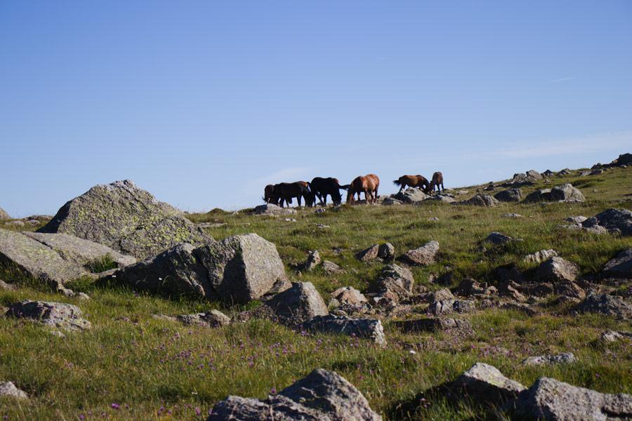 Cavalli selvaggi sul Monte Aiona